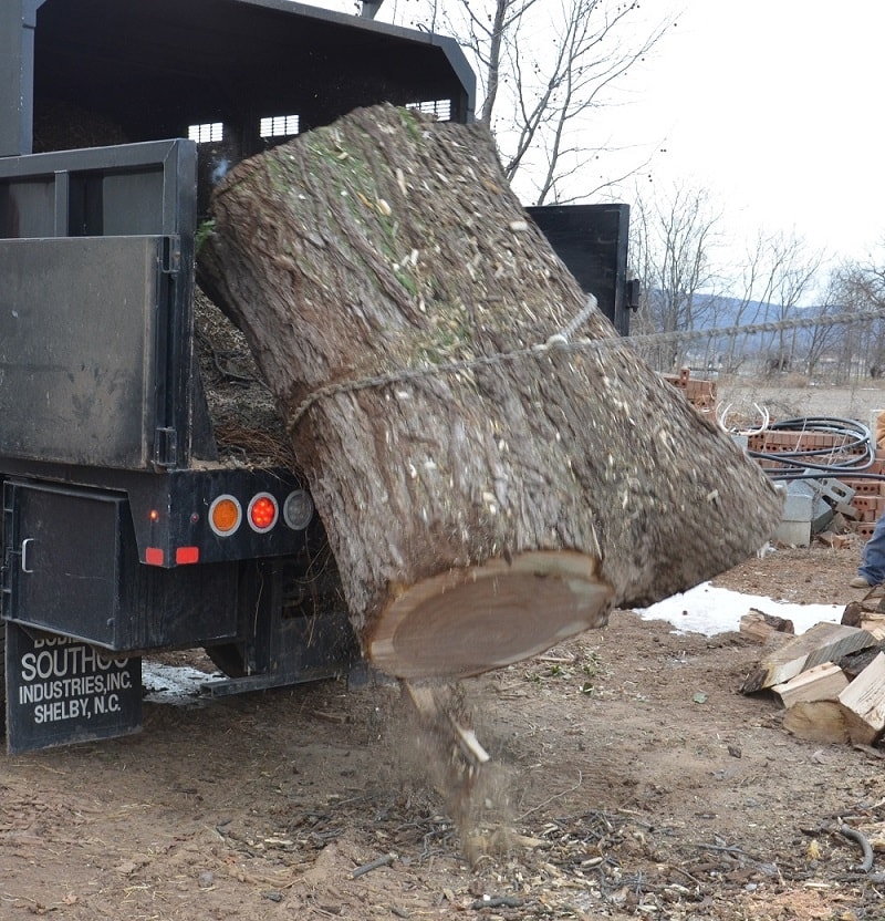 Hagerstown Black Walnut